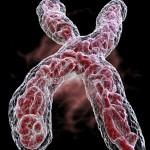 Chromozomy v lidech, jsou ta odlišnost mezi skvělou a průměnrou firmou.