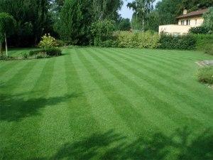 Založení trávníku a údržba trávníku