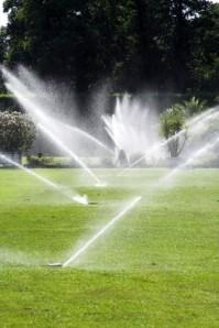 Nadměrné zavlažování může z trávníku udělat rozmazleného fakana.