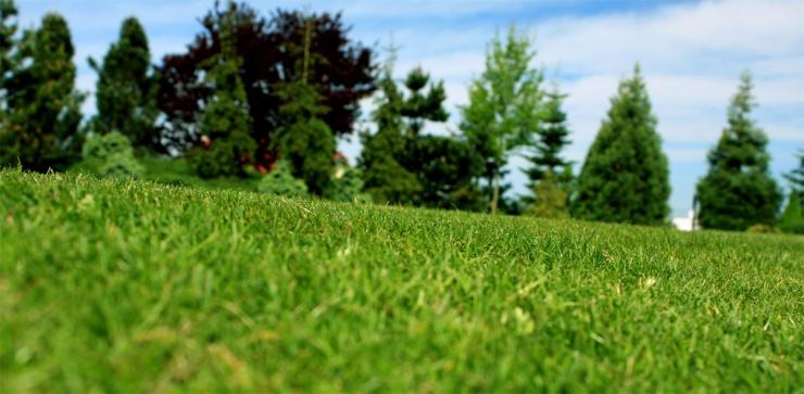 Anglický trávník očima žížaly