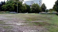Centralni-park-topdressing