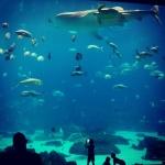 Aquarium v Atlantě a spektakulární podívaná